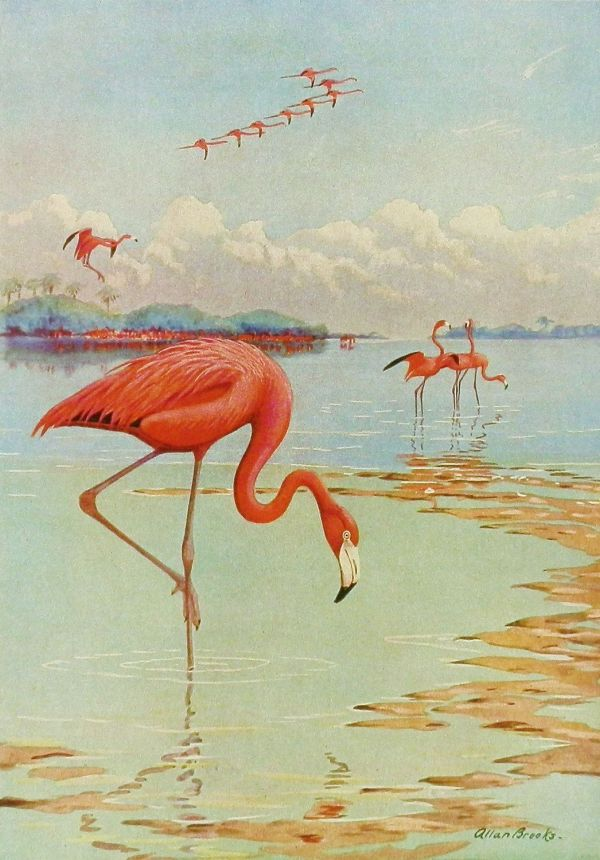1930s Decor . Vintage Bird Illustration