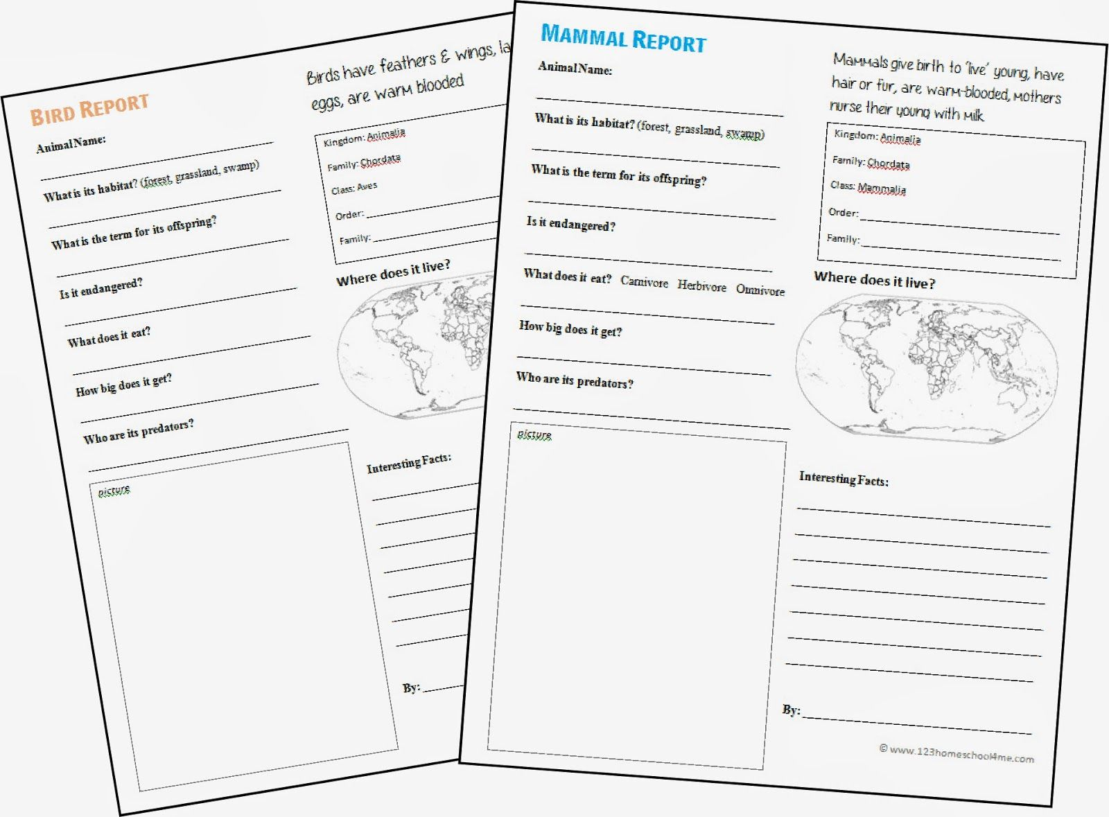 Elementary School Animal Report Forms