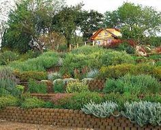 Gardens On A Slope Google Search Tuine Pinterest Gardens