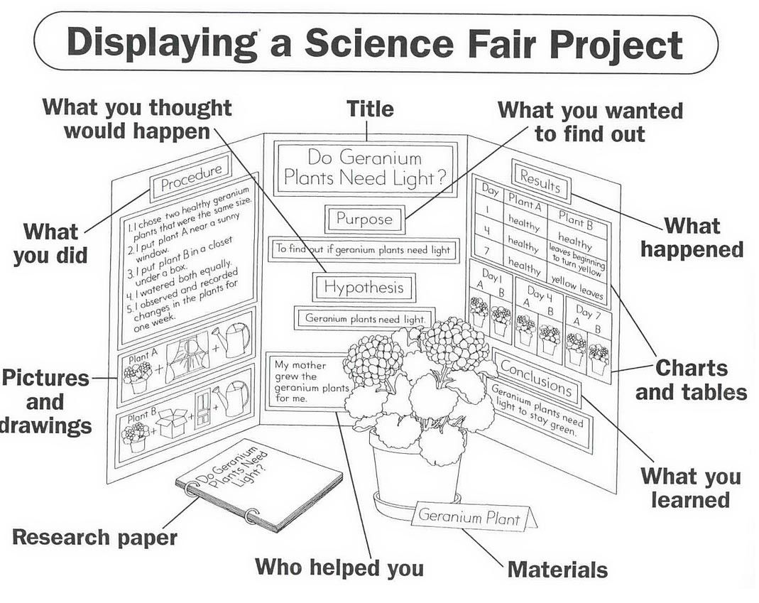 What A Science Project Board Should Look Like