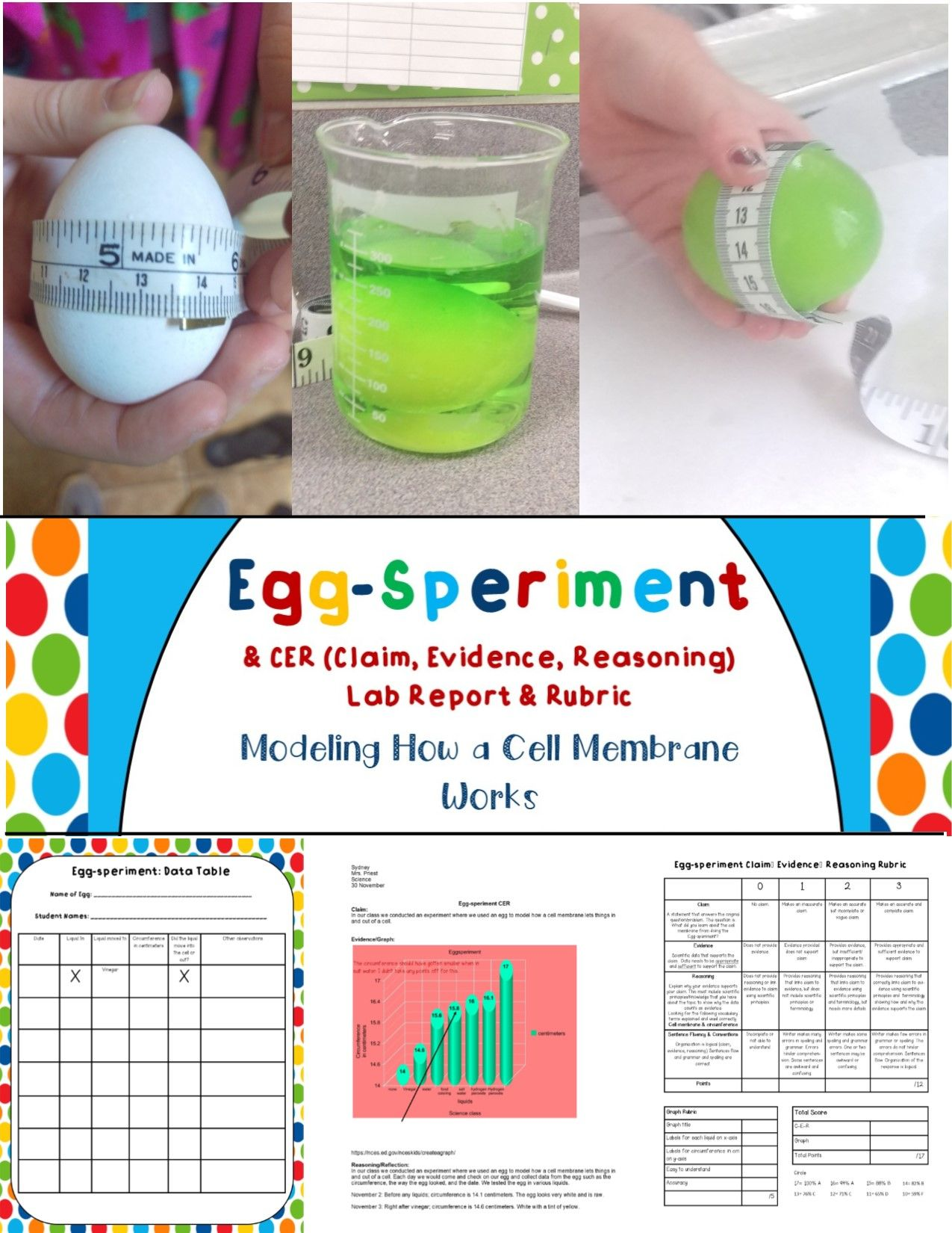 Cell Membrane Eggsperiment Activity Cer Amp Rubric Aligns