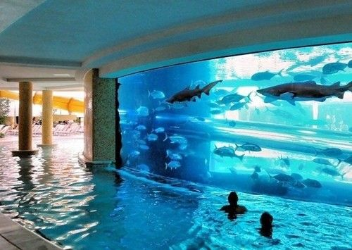 In addition to my salt water pool for my pet dolphinI will now add a lazy river with sharks