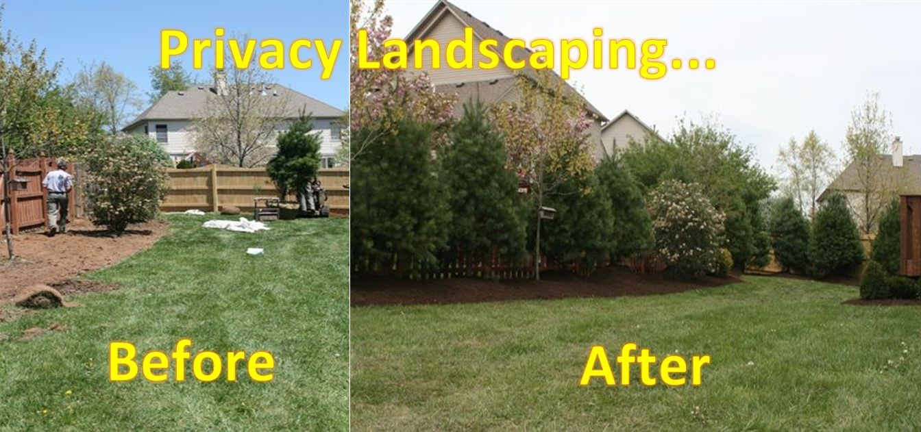 Privacy Landscaping Ultimate Lawn And Landscape Home Page