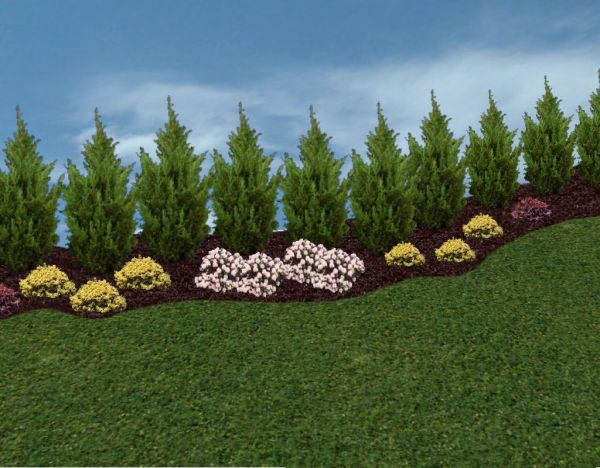 Privacy Landscaping Trees Ideas