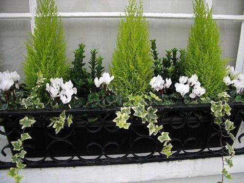 Outdoor Winter Garden Boxes Google Search Outdoor Winter