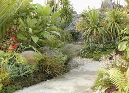 Nz Kowhai Garden Native Google Search Garden Pinterest