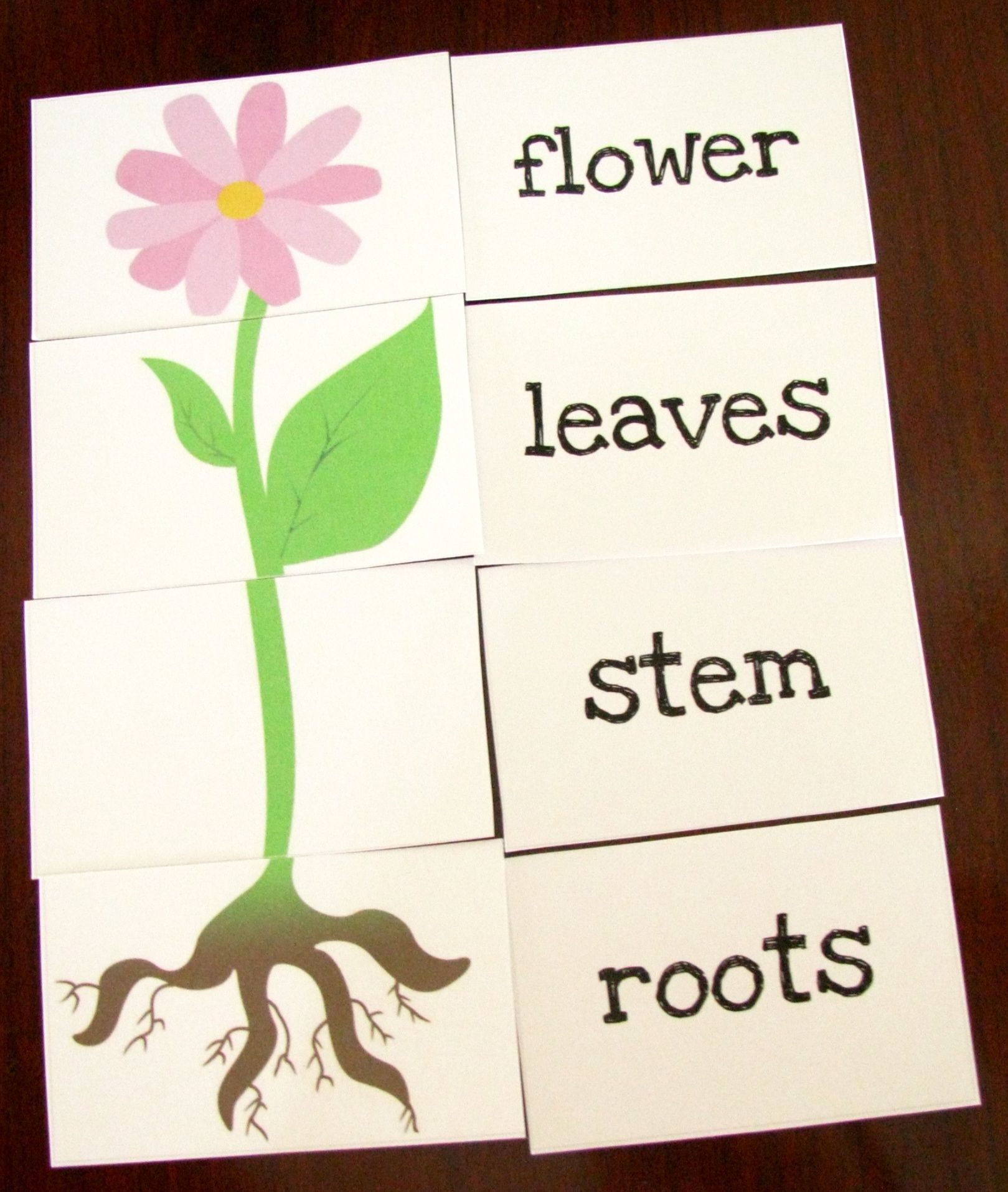 Great Printable Resources Plants