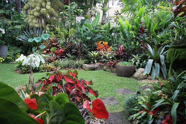 Tipos De Jardins E Como Decorá Los Gardens Tropical Gardens And