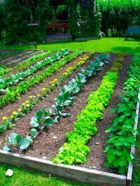 tiny gardens | Small Vegetable Garden Design, Perfect ...