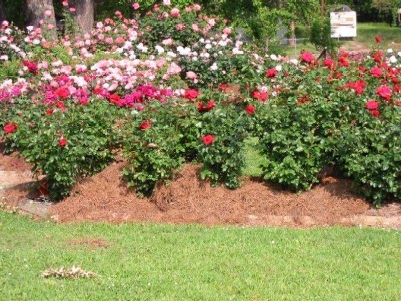 Rose Garden Ideas Small Rose Garden Ideas Landscaping Ideas
