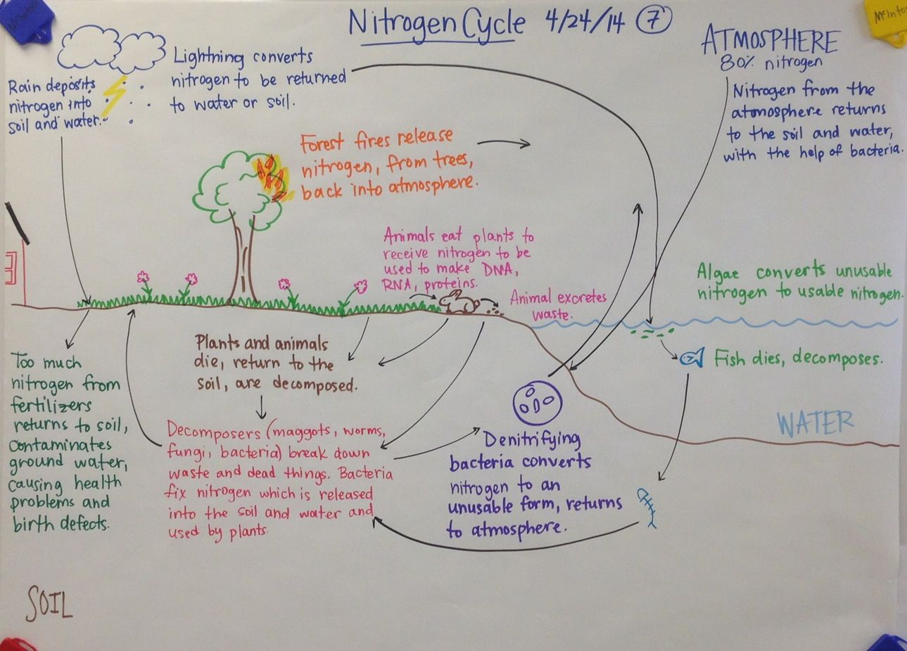 Nitrogen Cycle Biology Glad Anchor Chart