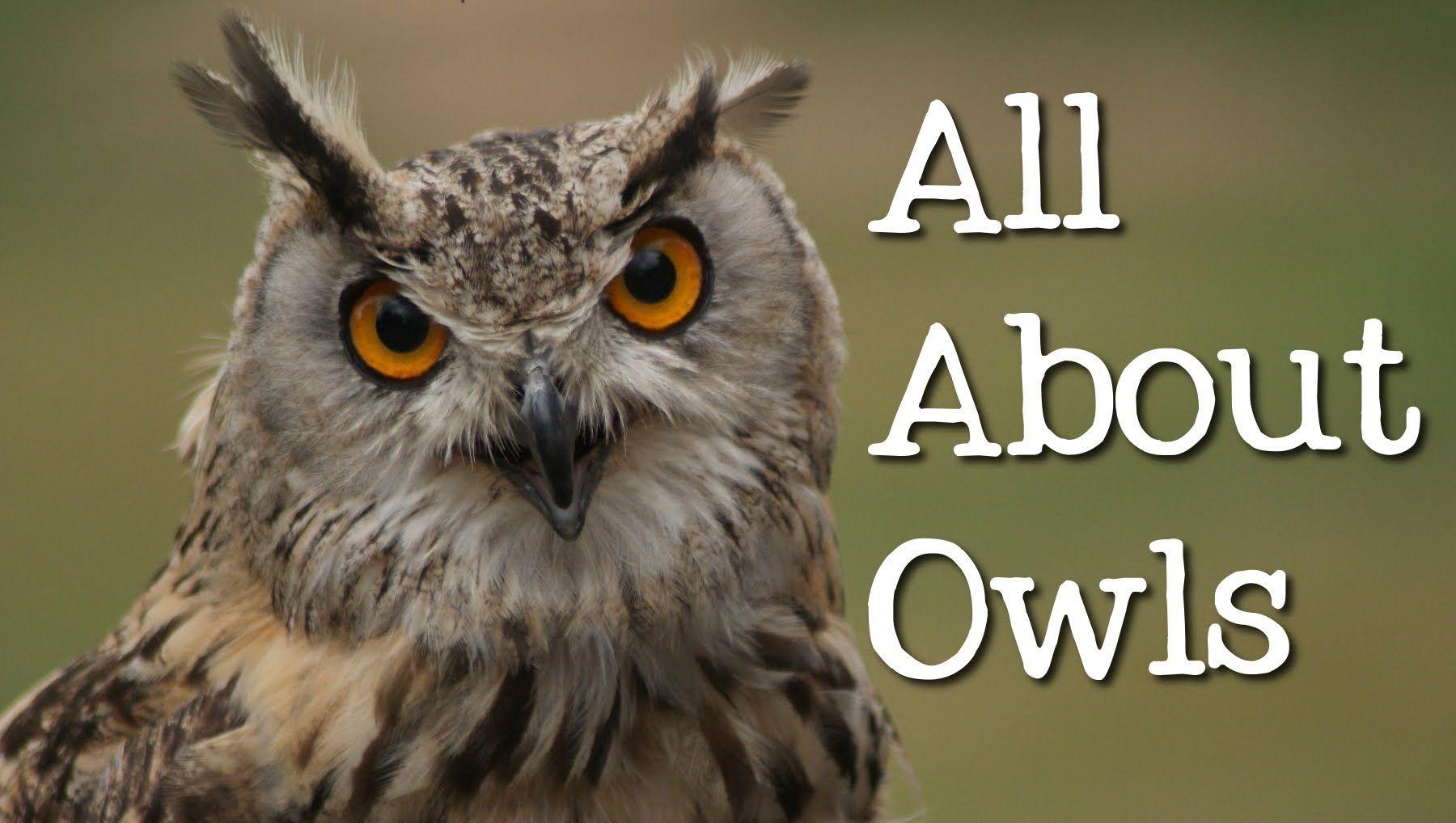 All About Owls Backyard Bird Series
