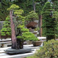 #bonsai rock planting Kimura #japanese #garden | Bonsai ...