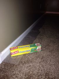 Painting baseboards?? Protect your carpets with press n