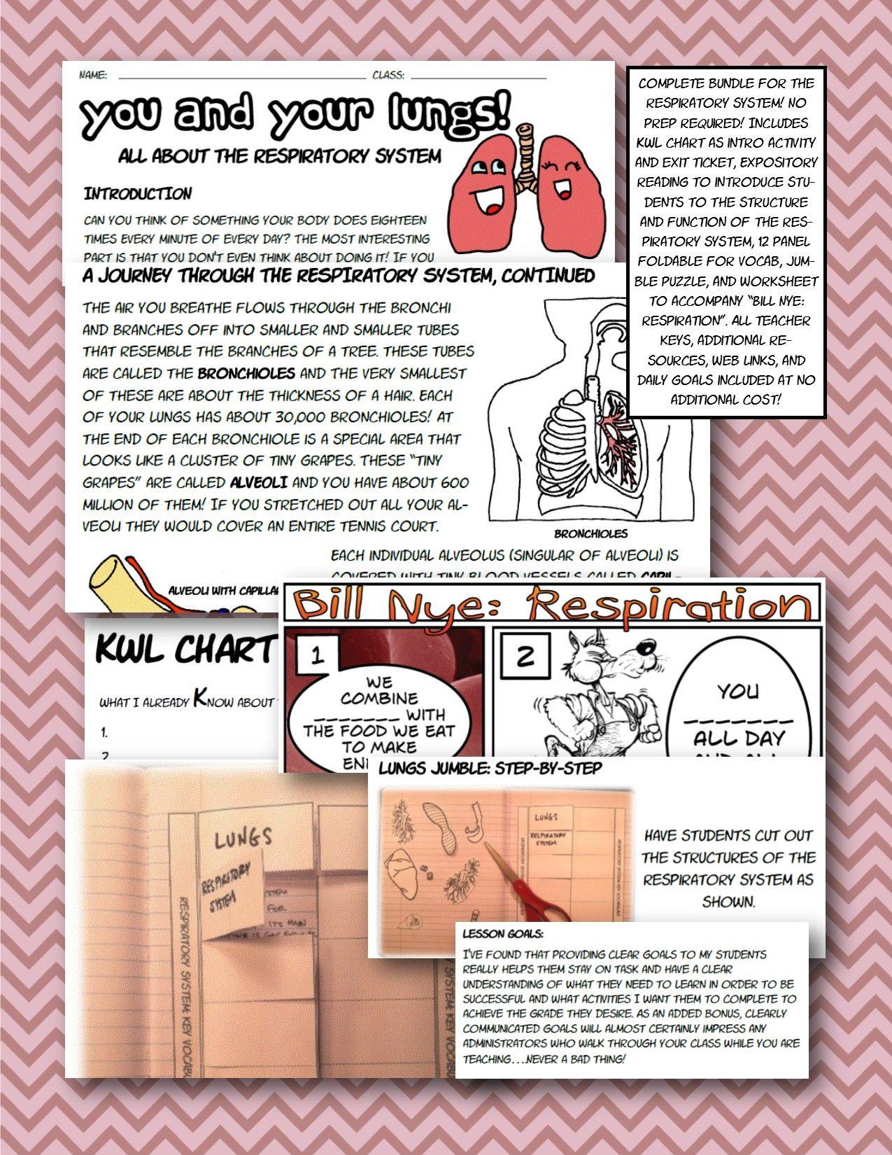 Respiratory Body System Bundle Foldable Interactive