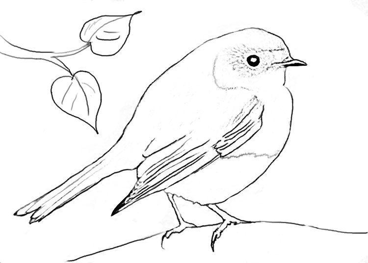Rotkehlchen-Ausmalbild coloring 3 Pinterest