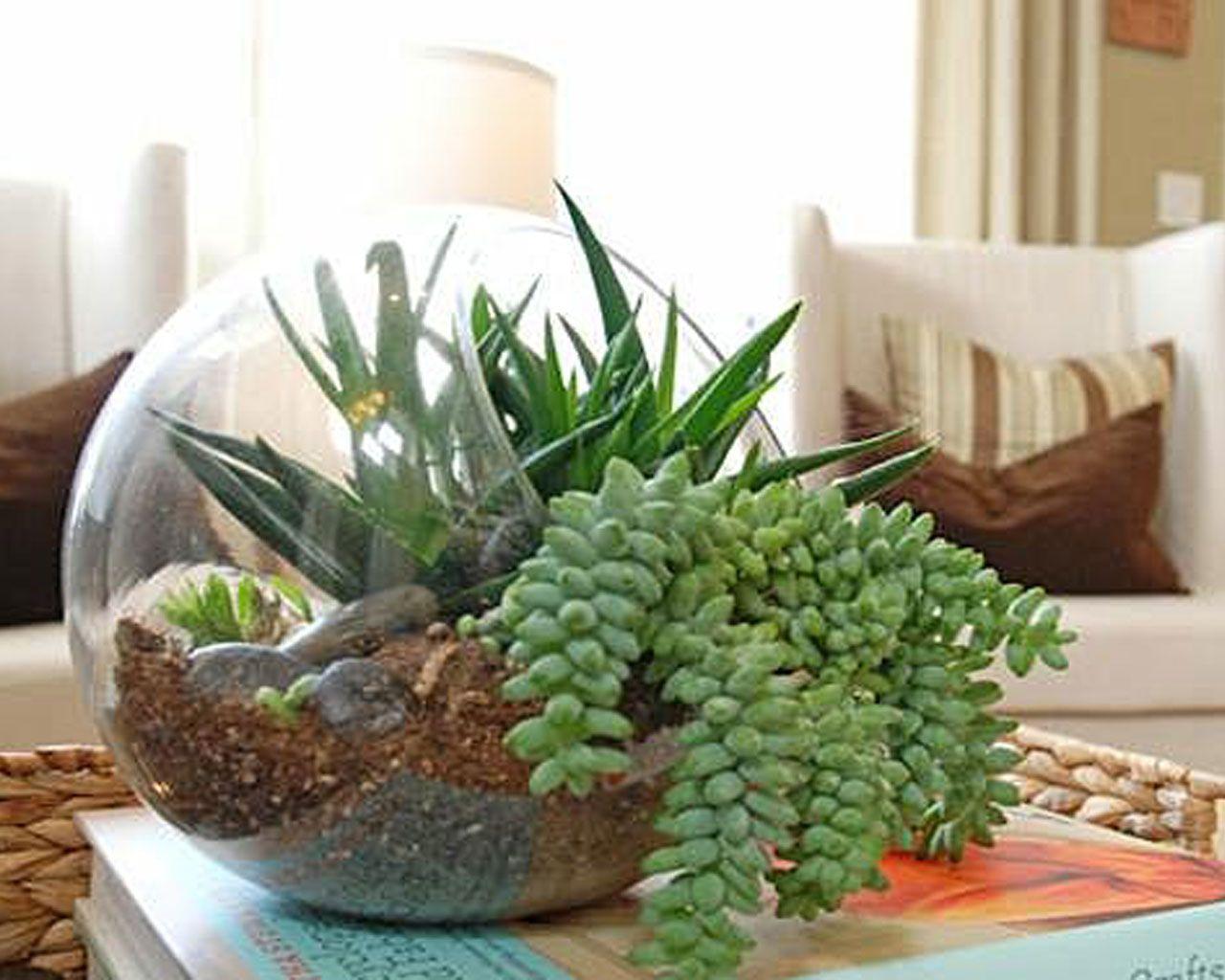 17 Best 1000 Ideas About Indoor Gardening On Pinterest Indoor