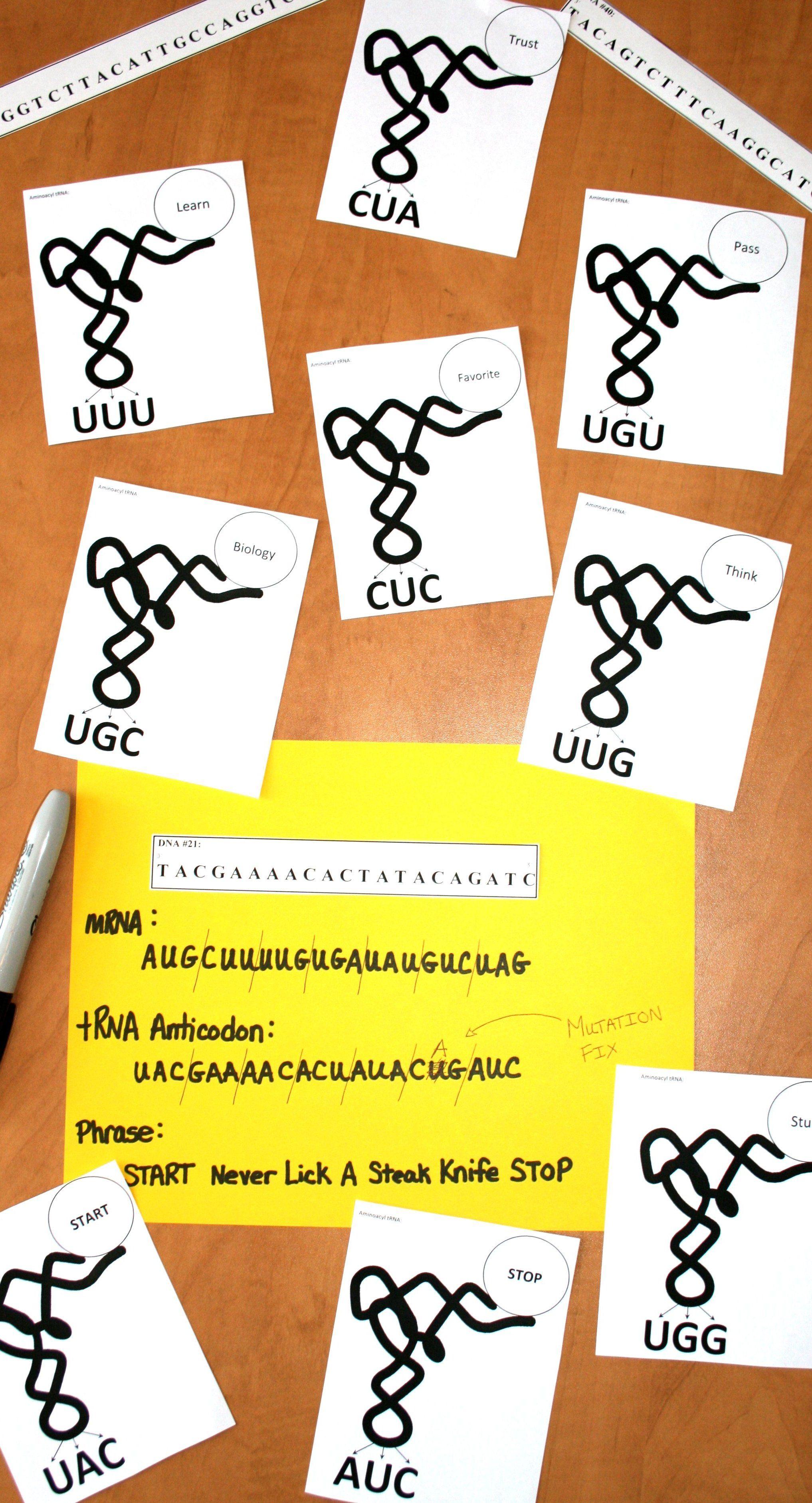 Genetics Dna Transcription Amp Translation With Words Dry