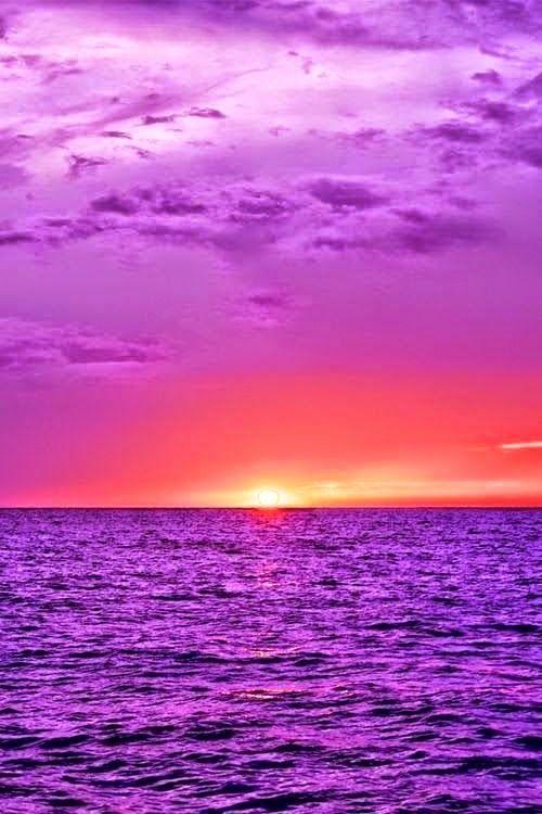 nature landscape - purple