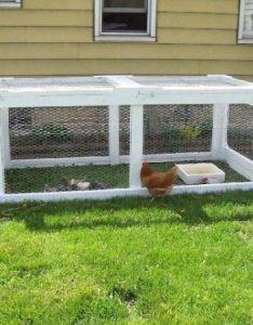 legitimate reasons to start raising quail in your urban homestead also rh za pinterest