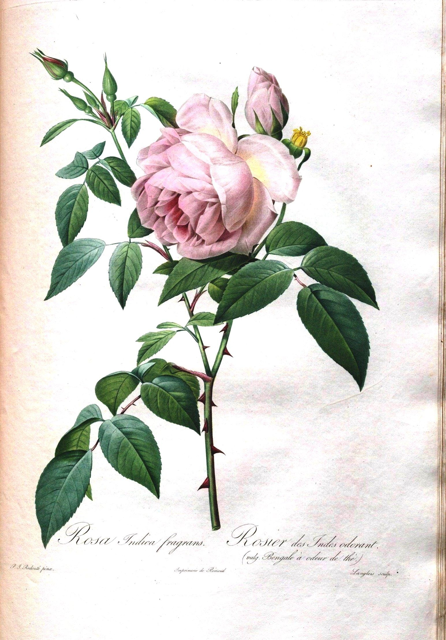 Vintage Printable Botanical 7