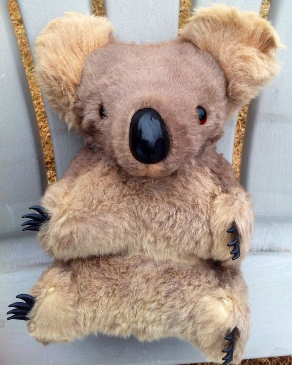 "Big 12"" Vintage Australian Glass Eyes Real Fur Koala Bear"
