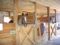 Horse stall ideas | House Interior - Half Doors ...