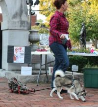 husky sled dog costume | radical | Pinterest | Sled dogs ...