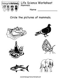 Kindergarten Life Science Worksheet Printable | Worksheets ...