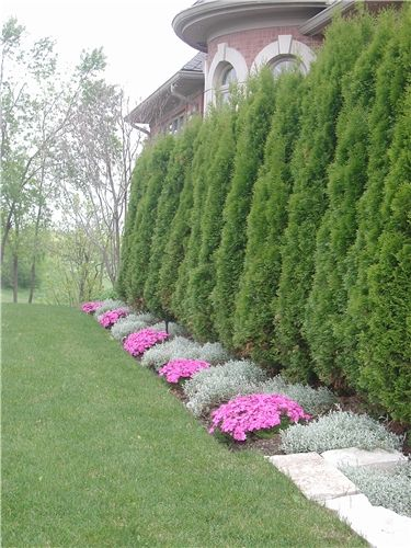 Divide The Space In The Landscape Using Hedging Plants Like