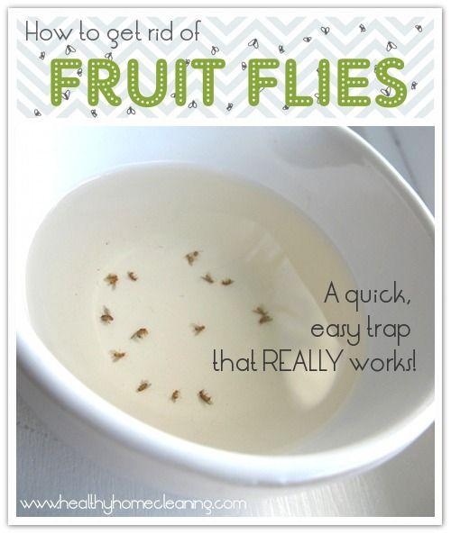 Fruit Flies On Pinterest Fruit Fly Traps Fruit Fly