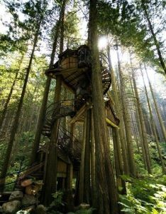 The enchanted forest wonderful wonderland treehouse design awesome tree house ideas that people can live in also top houses most beautiful pages if only pinterest rh