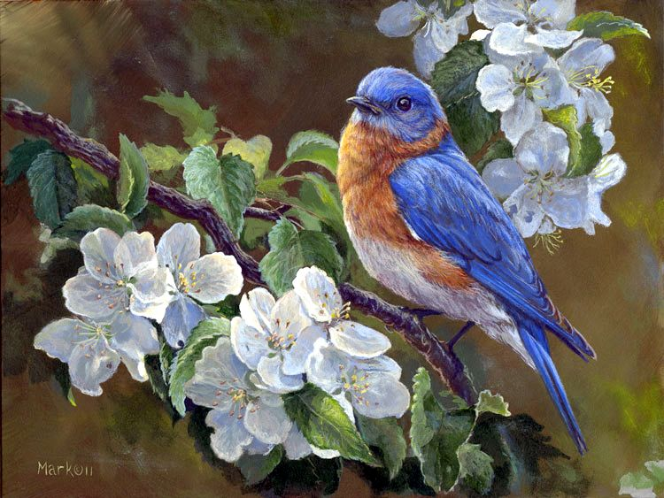 Watercolor Bluebird Garden Bird Pack 28 Images