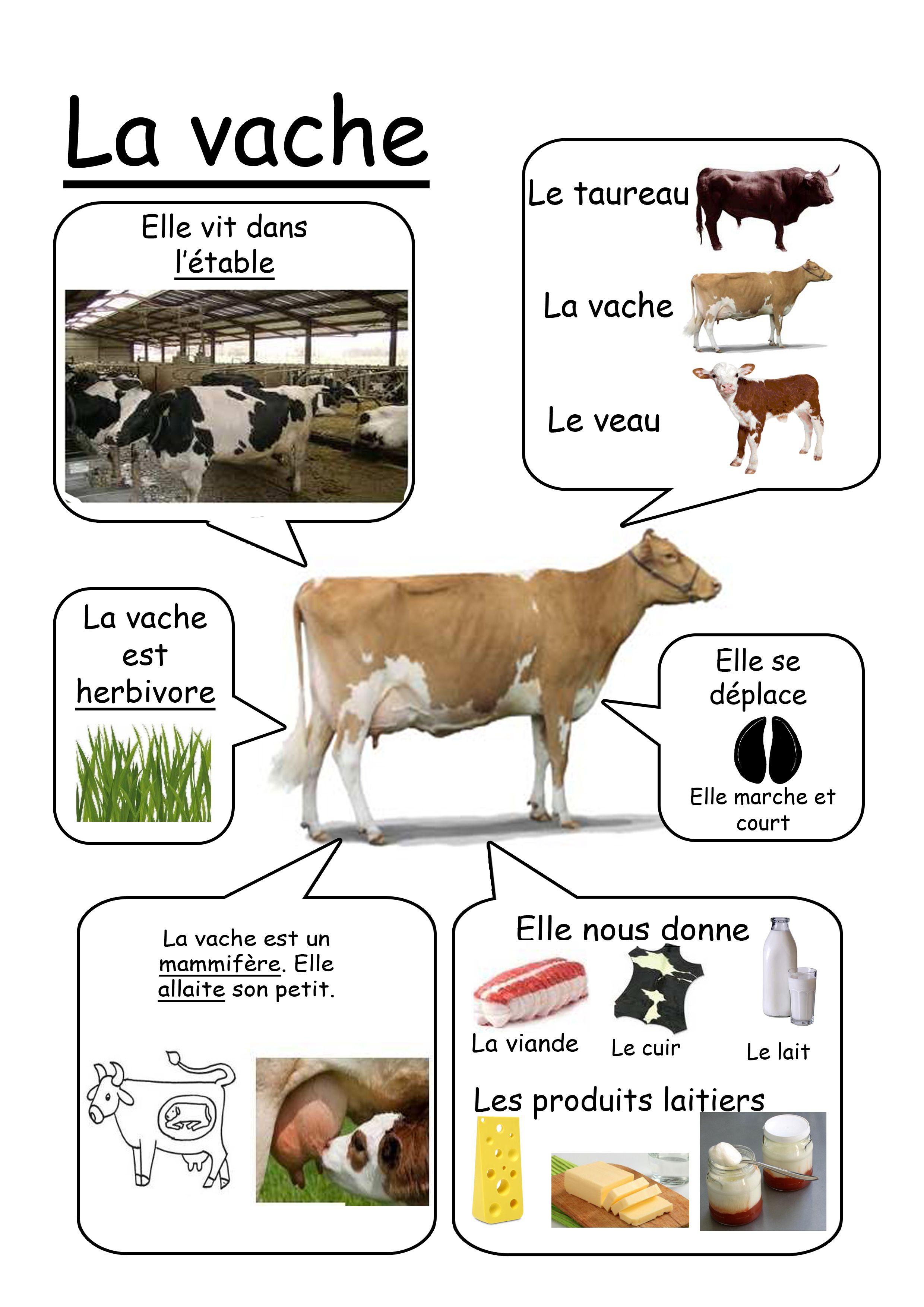 C Est Nul En Anglais : anglais, Vache, French