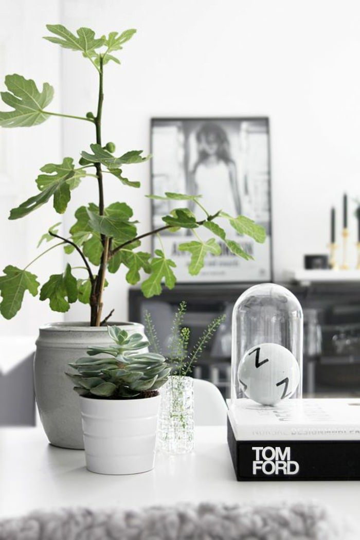 99 Great Ideas To Display Houseplants Plante Interieur Plantes