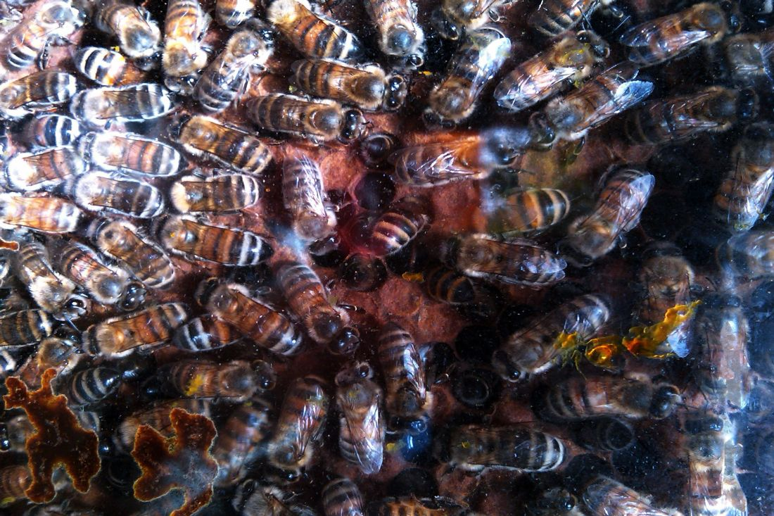 How to get rid of inground bees cleaning pinterest bees