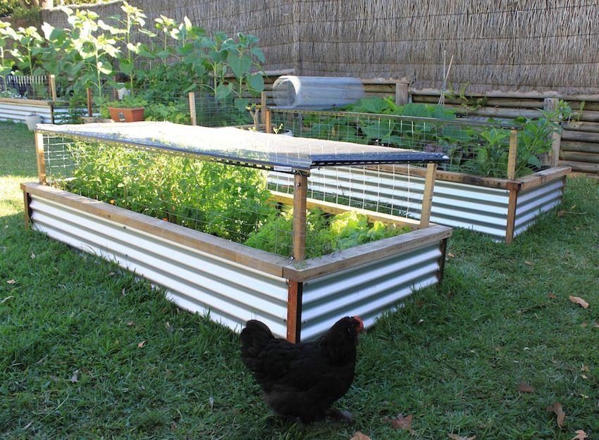 Explore Raised Bed Garden Design And More