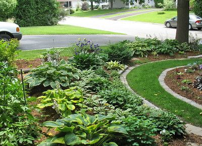 A Hosta Garden Perfect For Under Pine Tree's! Outdoor Living