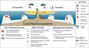 coral reef structure  Szukaj w Google   Ocean education   Pinterest