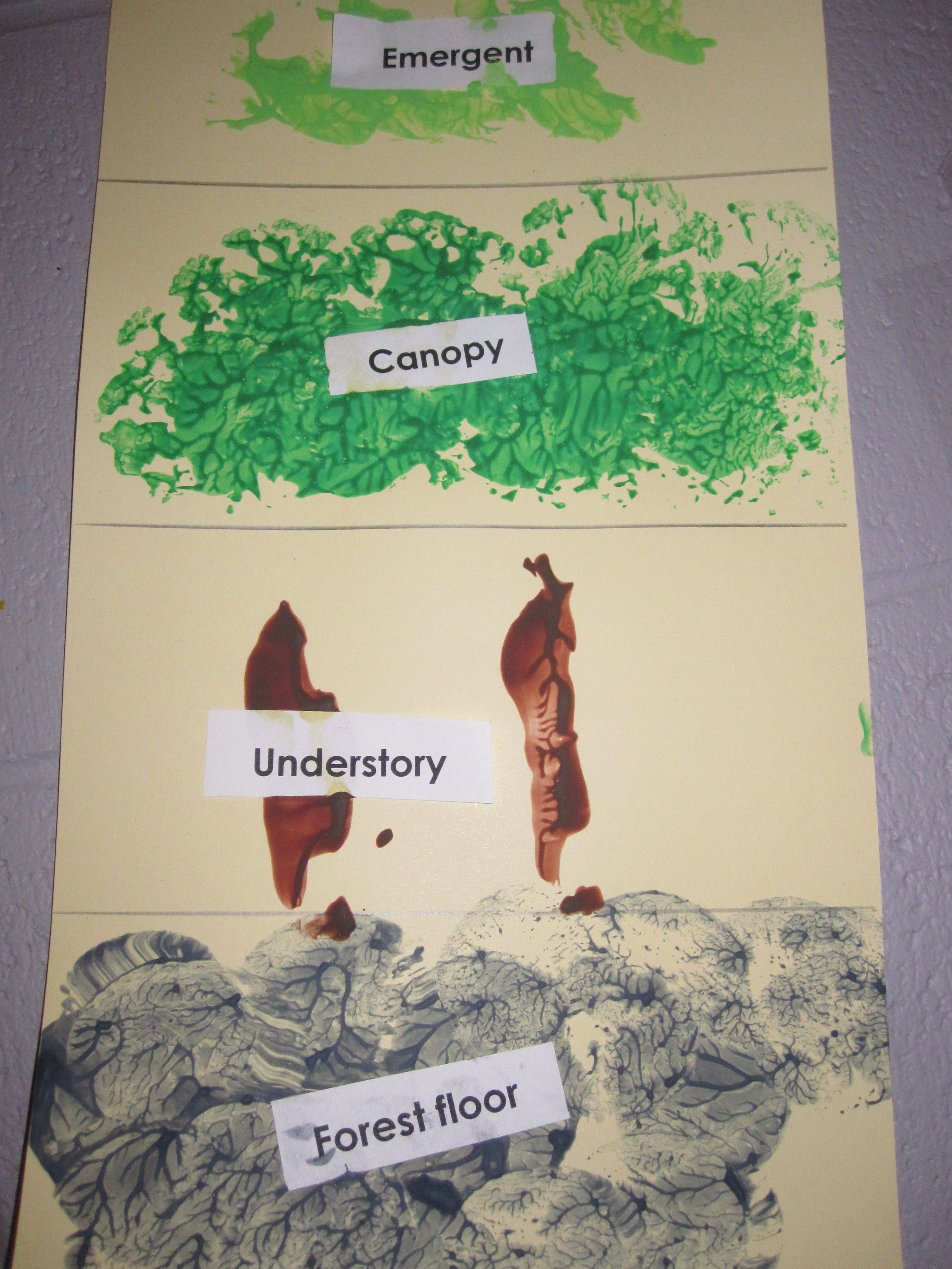Rainforest Levels Using Potatoes For The Forest Floor Celery For The Understory Cauliflower