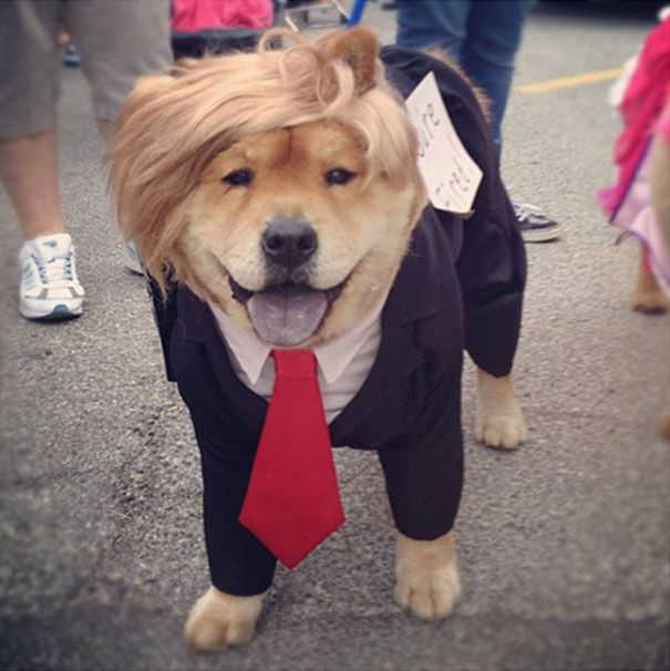 10 Awesome Halloween Costume Ideas For Dogs Dog Animal And