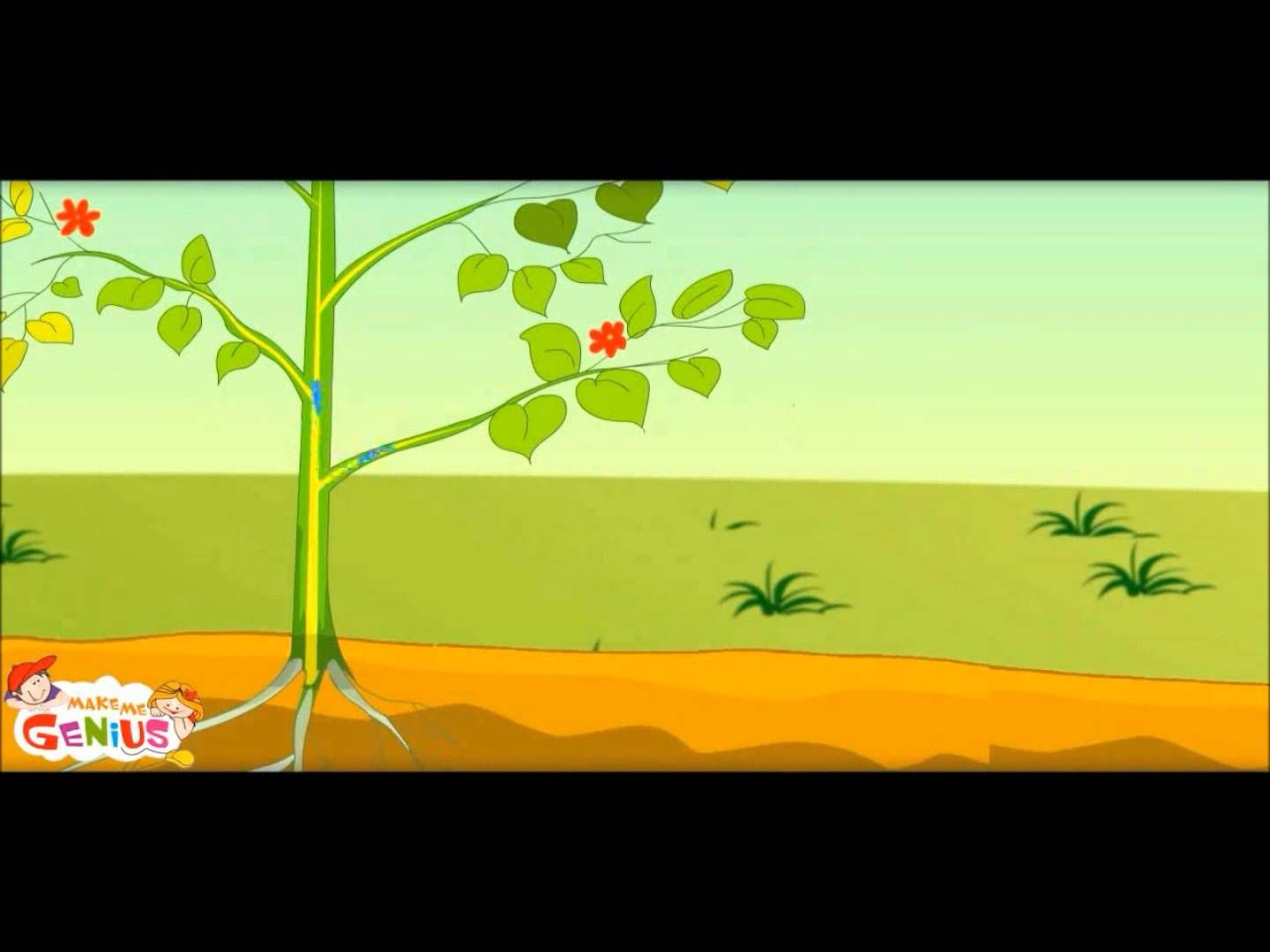 What Is Photosynthesis In Plants