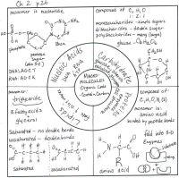 Organic Macromolecules Worksheet. Worksheets. Ratchasima