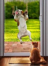 Dog running into door | Animals | Pinterest | Running, Dog ...