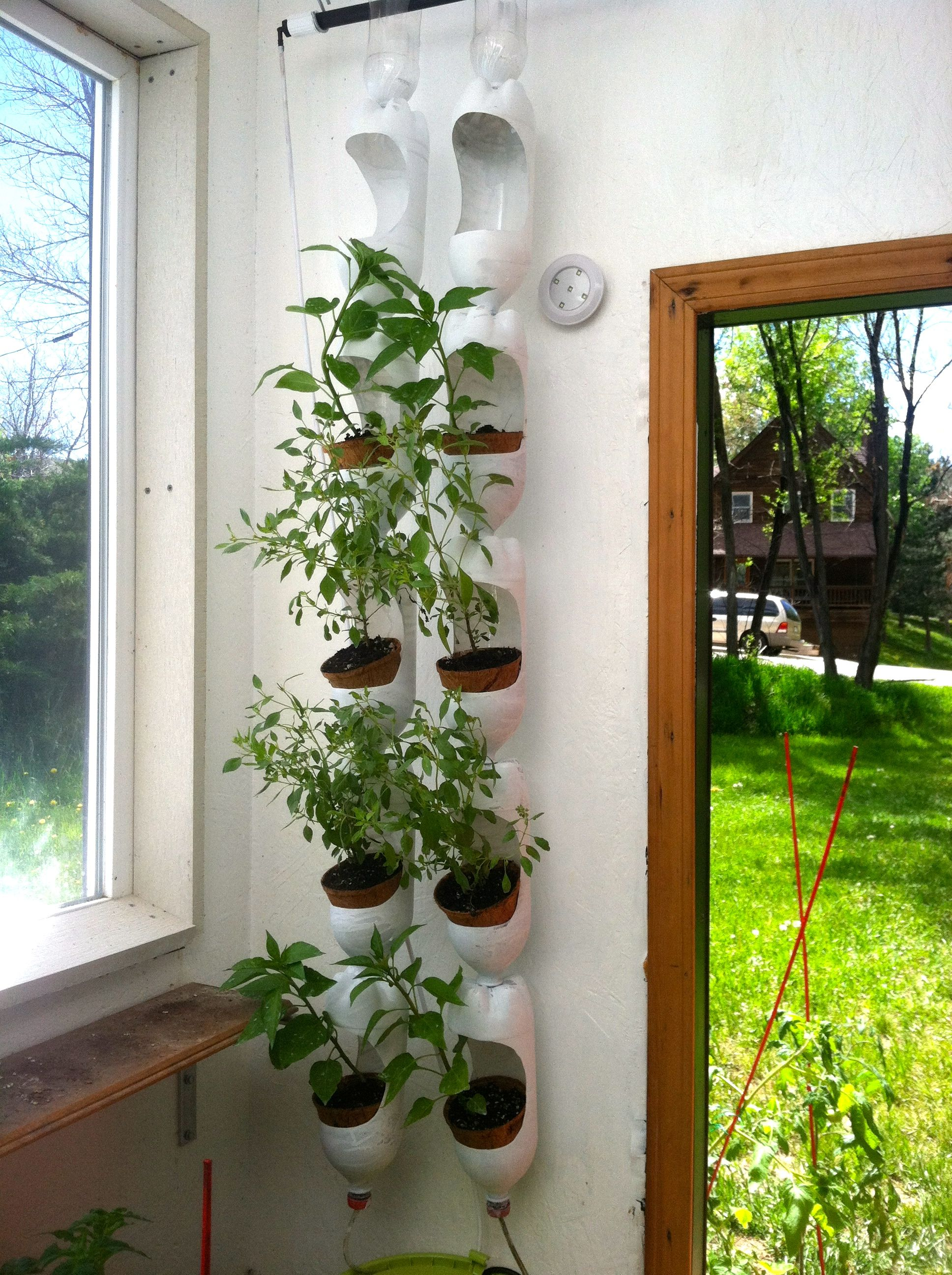 Plenty Of Basil Growing In Vertical Garden Made Out Of