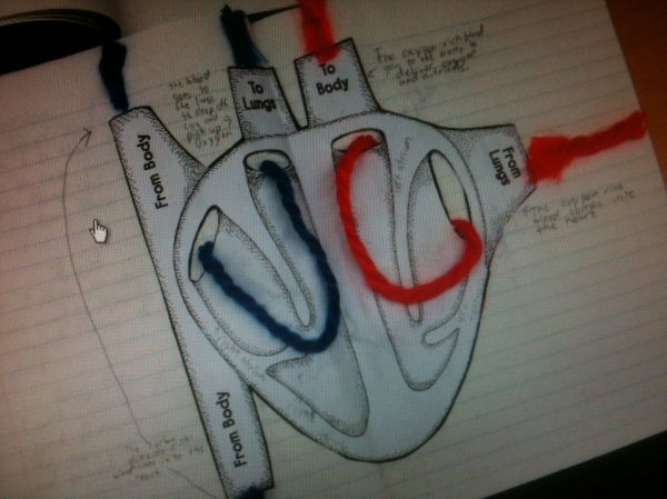 Circulatory System Ideas