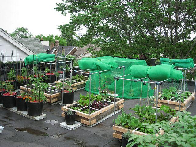 Rooftop Vegetable Garden Garden Pinterest Gardens