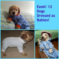 Too Cute! 12 Photos of Dogs Dressed As Babies | Dog ...