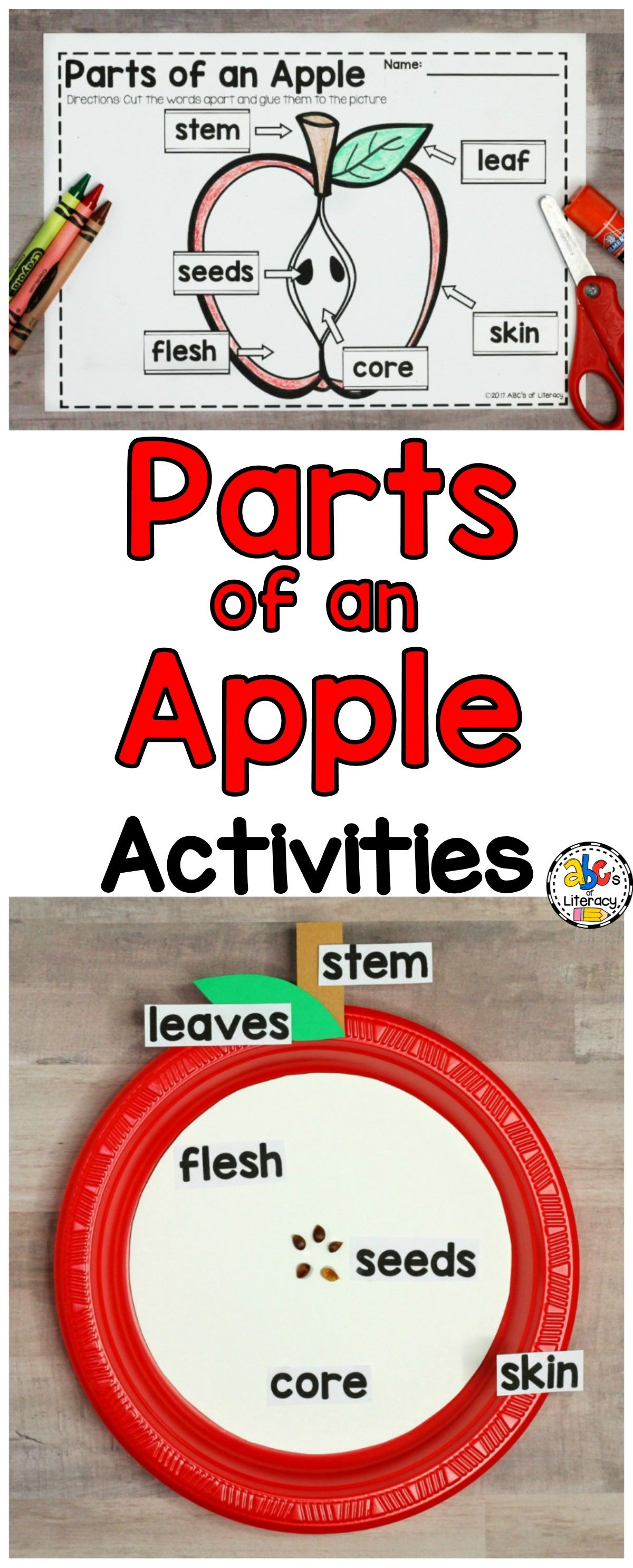 Parts Of An Apple Activities