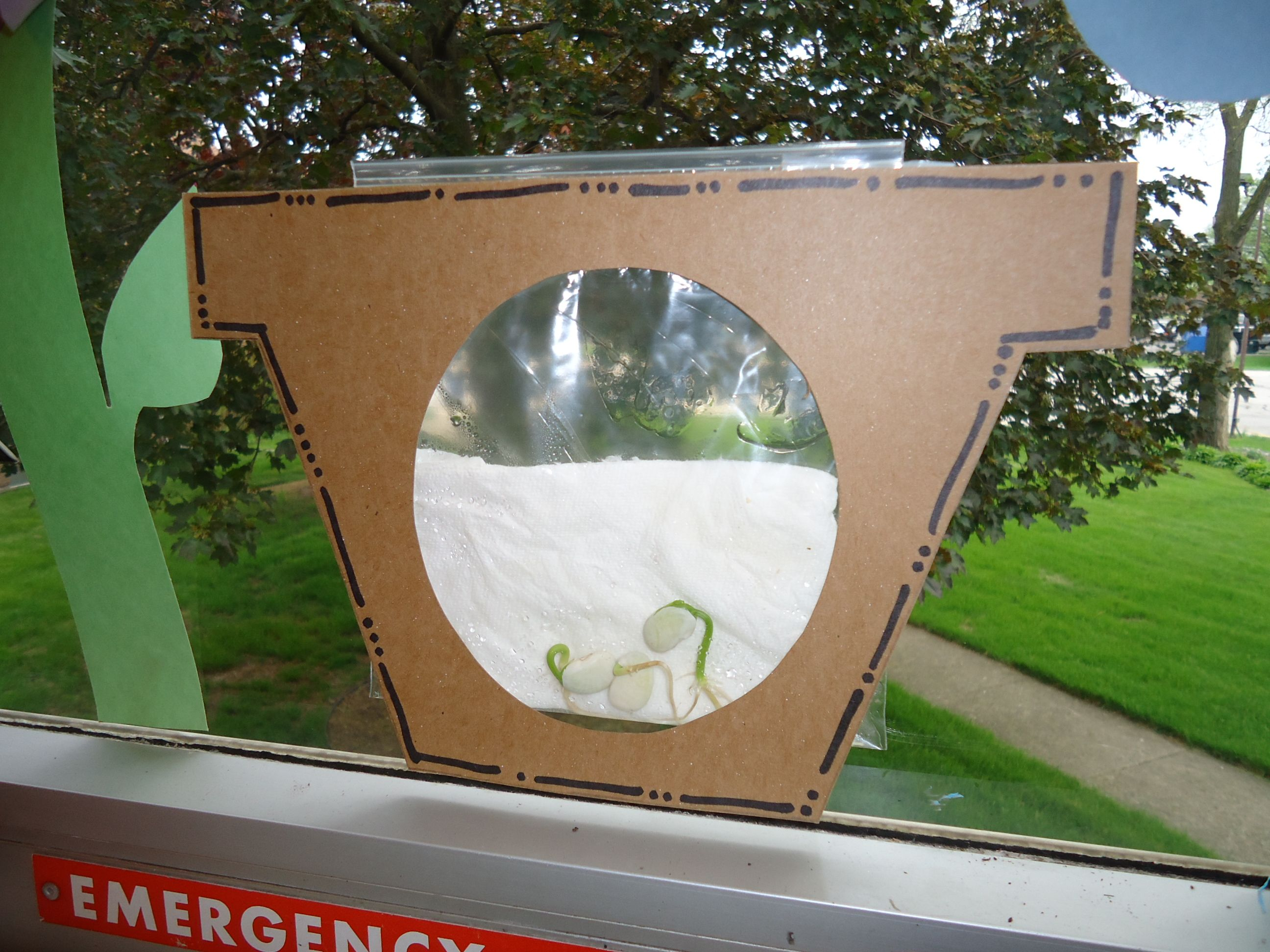 Lima Bean Planting This Cute Frame Made To Look Like A